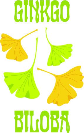 hurts: Ginkgo leaves are a old Chinese plant to help what hurts. Illustration
