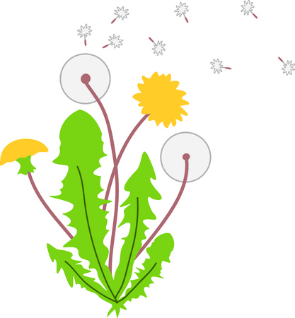 Deze paardebloem bloemen zijn een perfecte afbeelding voor uw lente een ontwerp. Stock Illustratie