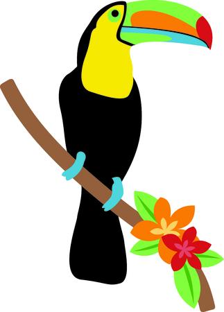 Die schöne Tukan lebt tief im Dschungel. Holen Sie sich einen Einblick in diese schöne Vogel in einem Zoo. Standard-Bild - 43778759