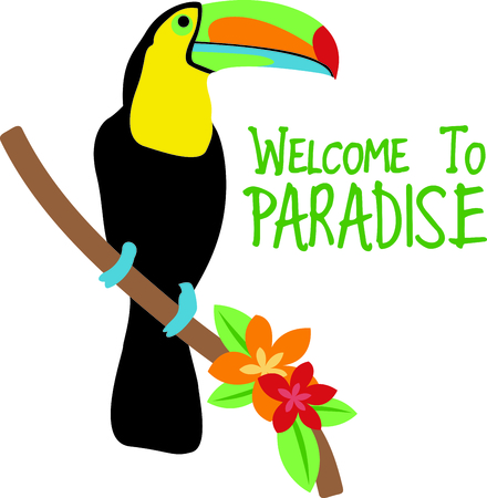 The beautiful toucan lives deep in the jungle.  Get a glimpse of this beautiful bird at a zoo.