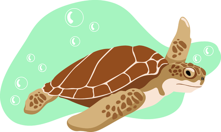 amphibians: Sea Turtles are fun to watch at the beach.  Get this to remember your vacation. Illustration