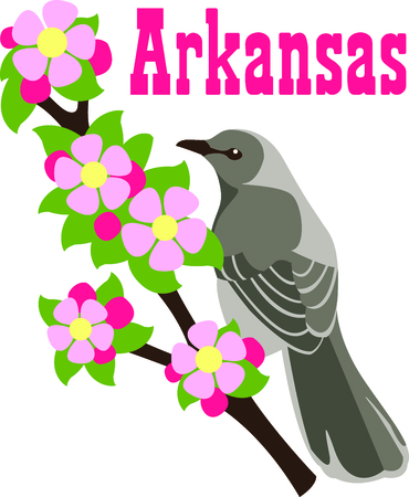 This apple blossom with a Mockingbird is a beautiful image to add to your design. Illustration