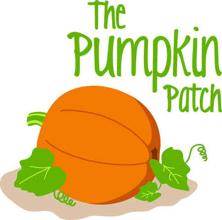 pumpkin patch: Give these pumpkins to someone for Halloween.  Your friends will love it!