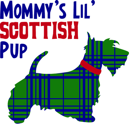 pure bred: Celebrate your heritage by displaying this cute Scottish Terrier.
