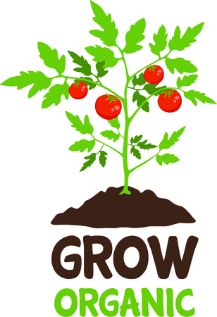 tomato plant: Use this image of a tomato plant in your gardening design.