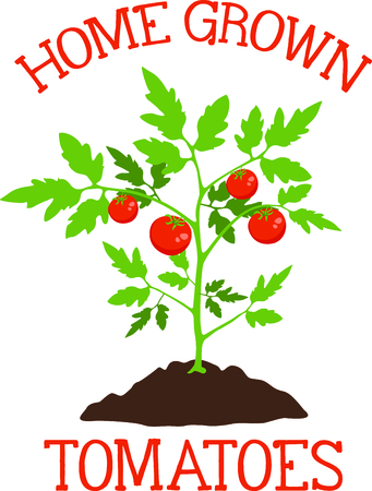 Use this image of a tomato plant in your gardening design. Stock Vector - 43784415