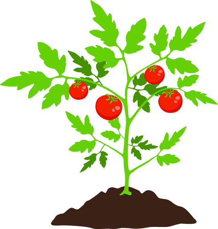 Use this image of a tomato plant in your gardening design.
