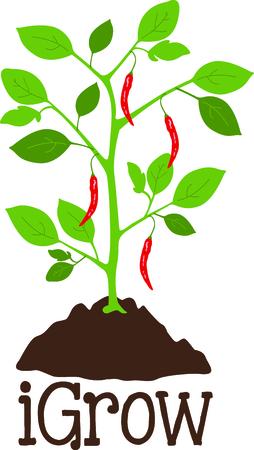 당신의 뜰 디자인에 고추 식물의 이미지를 사용합니다. 일러스트