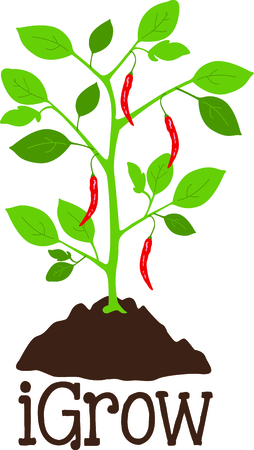 Use this image of a pepper plant in your gardening design.