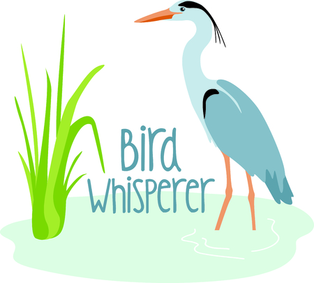 egret: Use this image of a Great Blue Heron in your design. Illustration