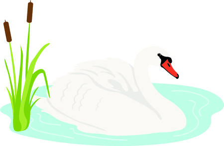 waterfowl: Get this swan image for your next design. Illustration