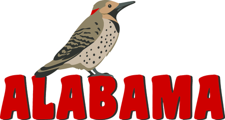 tremolare: Use this image of a Northern Flicker in your next design. Vettoriali