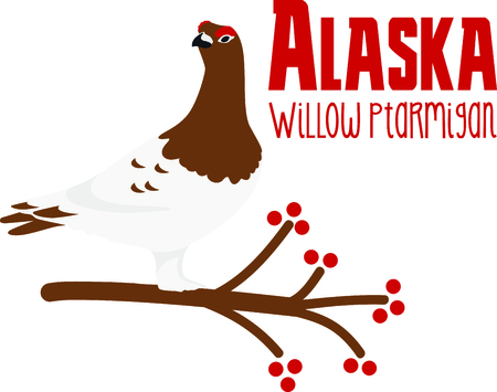 willow: Use this image of a Willow Ptarmigan in your next design.