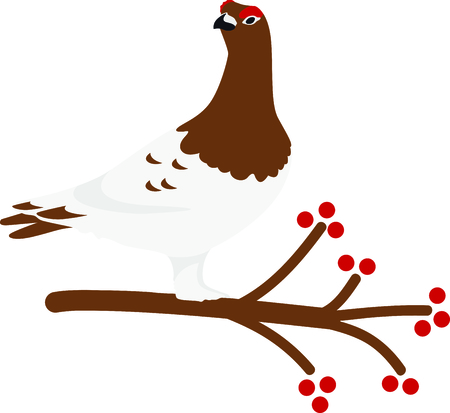 avian: Use this image of a Willow Ptarmigan in your next design.