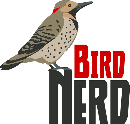 flicker: Use this image of a Northern Flicker in your next design. Illustration