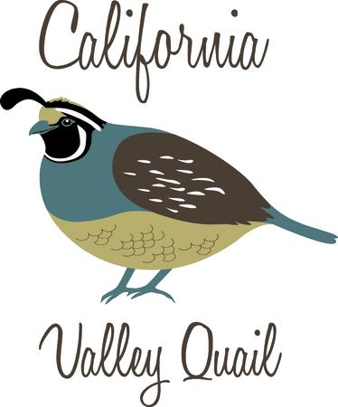 Gebruik dit beeld van een Valley Quail in uw volgende ontwerp.