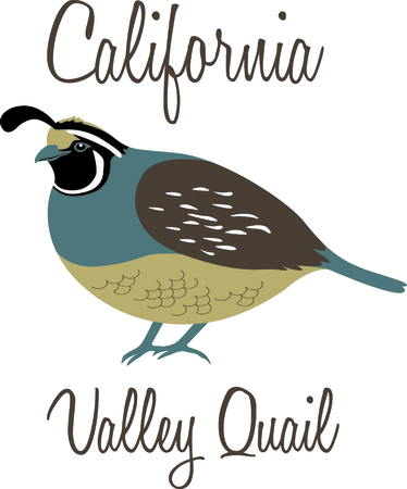 Use this image of a Valley Quail in your next design.