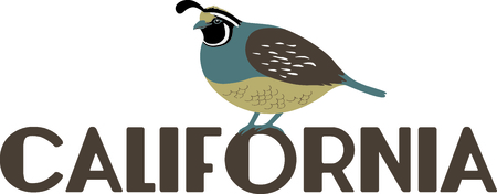 california coast: Use this image of a Valley Quail in your next design.