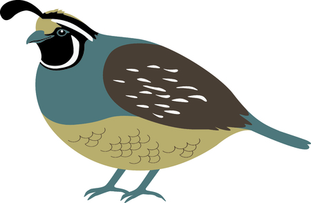 ca: Use this image of a Valley Quail in your next design.
