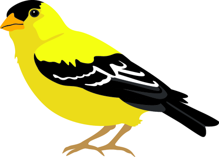 ia: Use this image of a goldfinch in your next design. Illustration