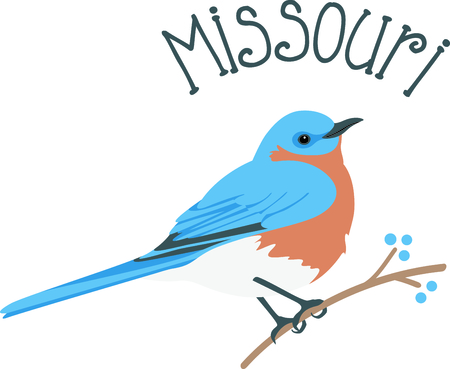 missouri wildlife: Use this image of a Bluebird in your next design. Illustration