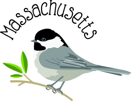 avian: Use this image of a Chickadee in your next design.