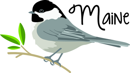 Use this image of a Chickadee in your next design.