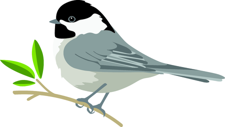 chickadee: Use this image of a Chickadee in your next design.