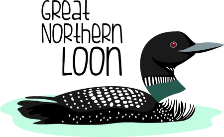 in common: Use this image of a loon in your next design. Illustration