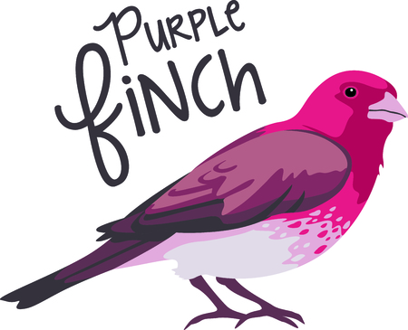finch: Use this image of a finch in your next design.