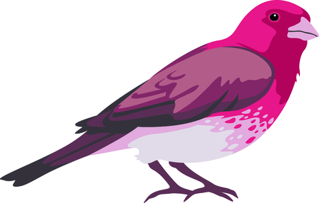 avian: Use this image of a finch in your next design.