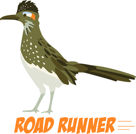 nm: Use this image of a Roadrunner in your next design.