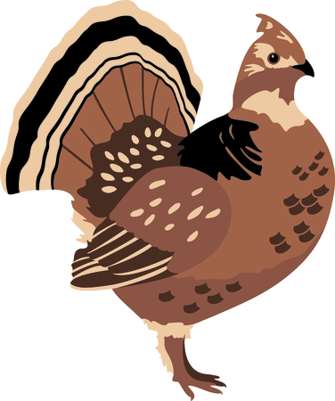 avian: Use this image of a Grouse in your next design. Illustration