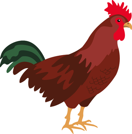 avian: Use this image of a chicken in your next design.