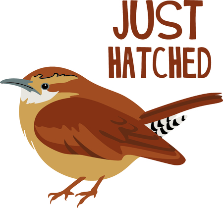 avian: Use this image of a wren in your next design. Illustration