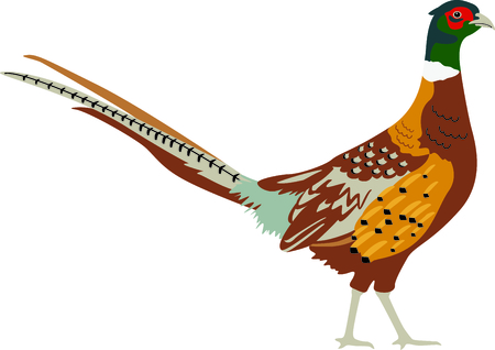 gamebird: Use this image of a wren in your next design. Illustration