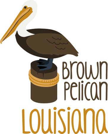 jetty: Use this image of a Brown Pelican in your next ocean design.