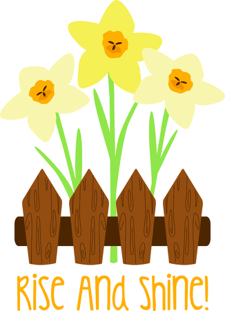 Use this image of fenced Daffodils in your next spring design. Imagens - 43904963