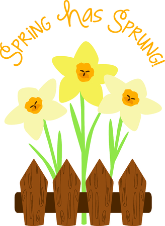 Use this image of fenced Daffodils in your next spring design. Imagens - 43904964