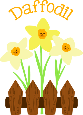 Use this image of fenced Daffodils in your next spring design. Imagens - 43904965