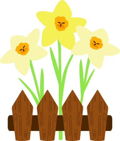Use this image of fenced Daffodils in your next spring design.