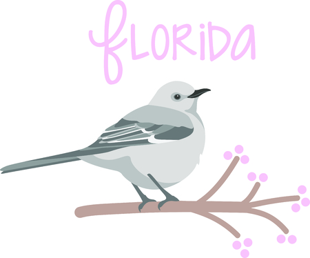 wild berry: Use this image of a Mockingbird in your next design. Illustration