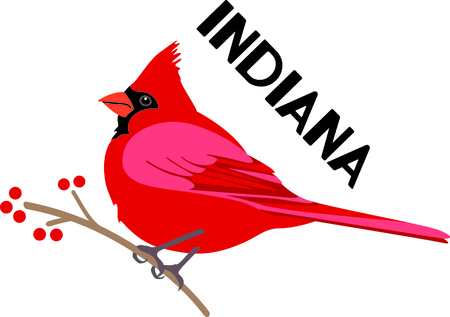 Use this image of a Cardinal in your next design.