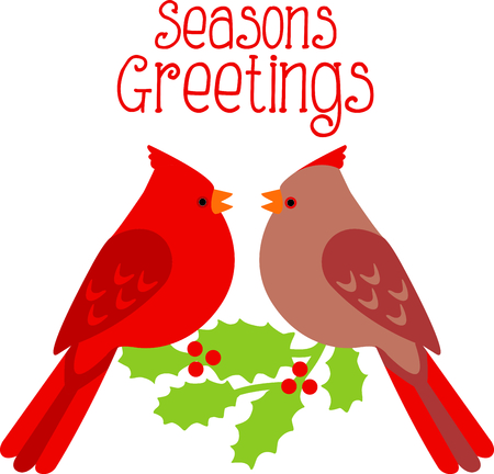 passerine: Cardinal pair for the bird lover at Christmastime. Illustration