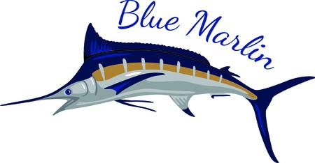 큰 파란 maralin 참으로 상품 캐치입니다. 특별한 낚시꾼에 대한 귀하의 프로젝트에이 상을받은 물고기를 스티치. 스톡 콘텐츠 - 43867336