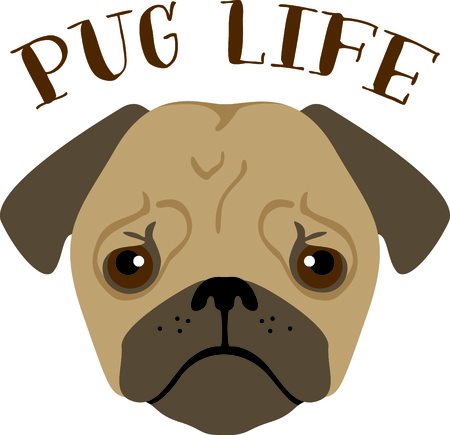 pure bred: Have a pug friend with you always with this little dog.