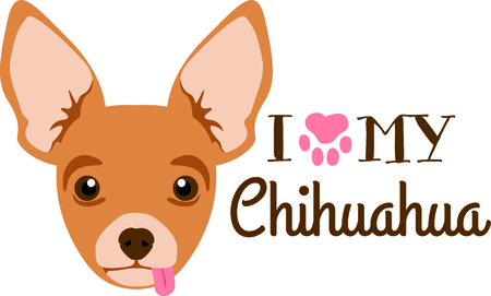 pure bred: Have a chihuahua friend with you always with this little dog. Illustration