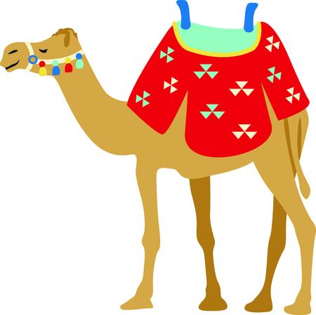 hump: Celebrare la cultura egiziano con un cammello nel deserto.
