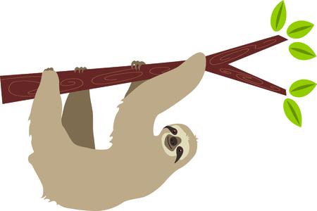 sloth: Esta imagen es perfecta para un profesor de ciencias. Hace un gran regalo! Vectores