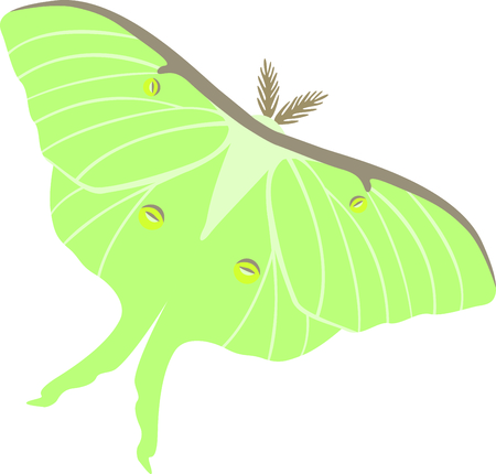 collectors: Beautiful green Luna Moth lepidopterist collectors and hobbyest. Illustration